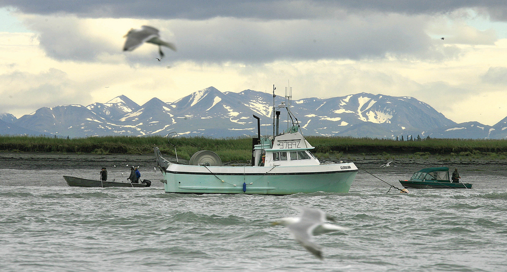 Alaska journal salmon catch at 41m bristol bay unlikely for Salmon fishing bay area
