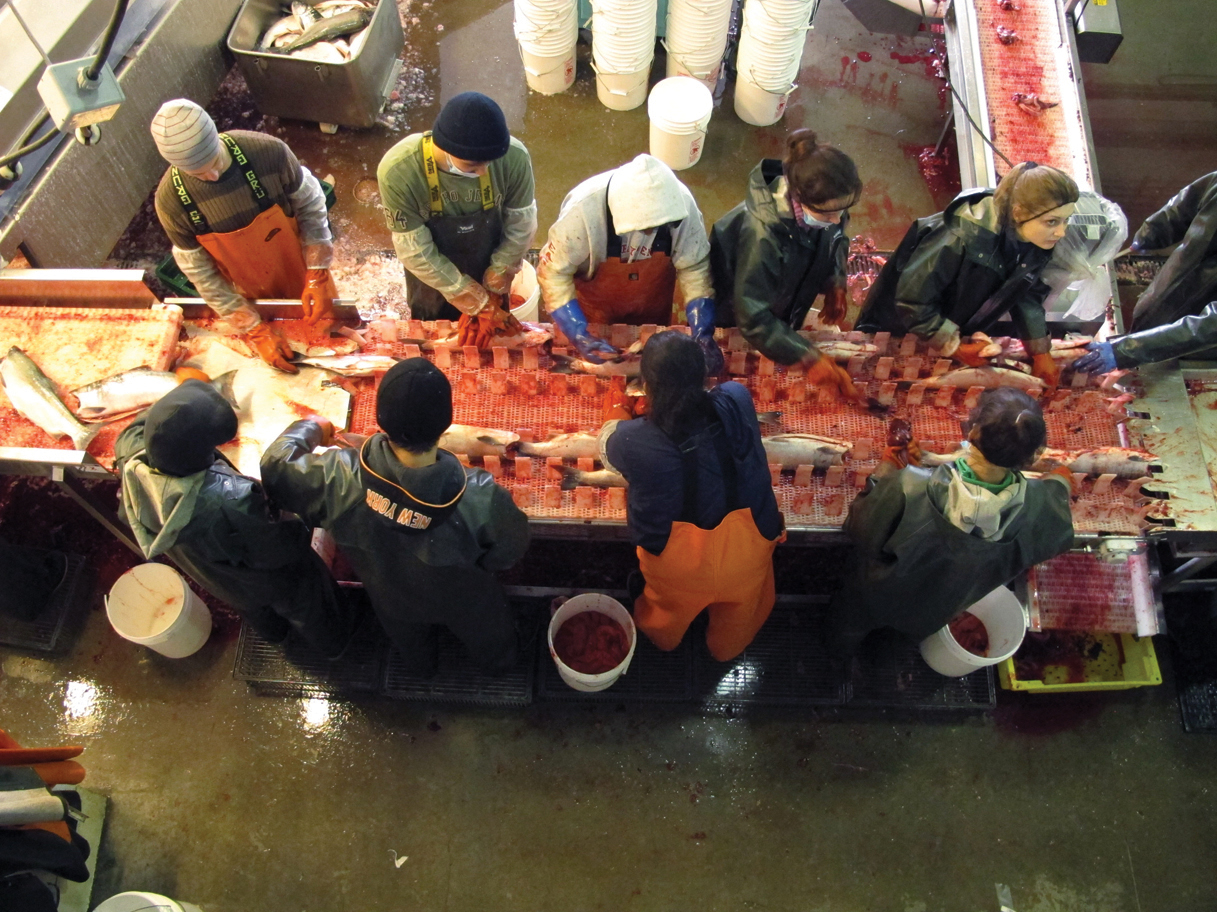 Alaska journal latest mcdowell group seafood report for How to get a fishing job in alaska